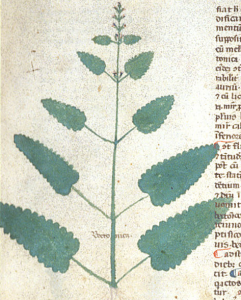 """The herb betony—a """"weapon against the devil."""" BL Egerton 747 f. 14r"""